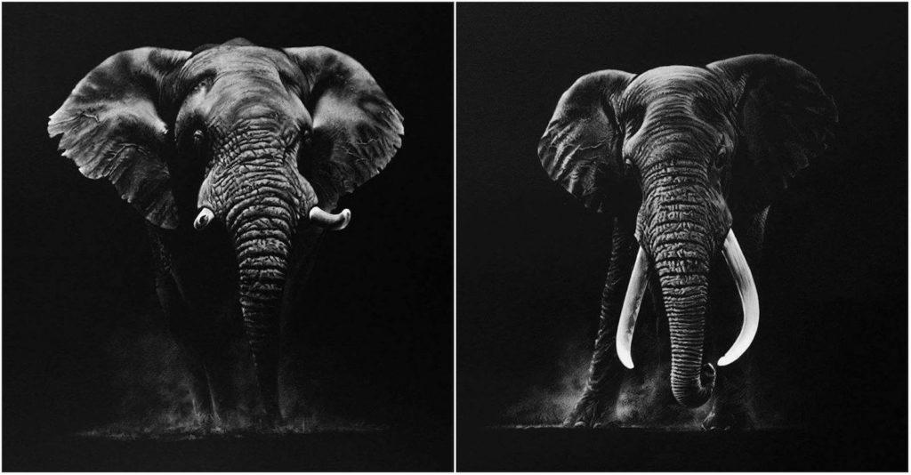 Richard Symonds desenhos elefante