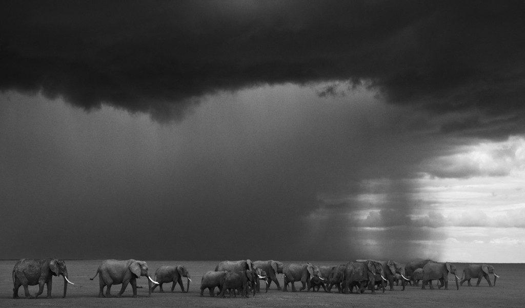 david-the-gathering-storm