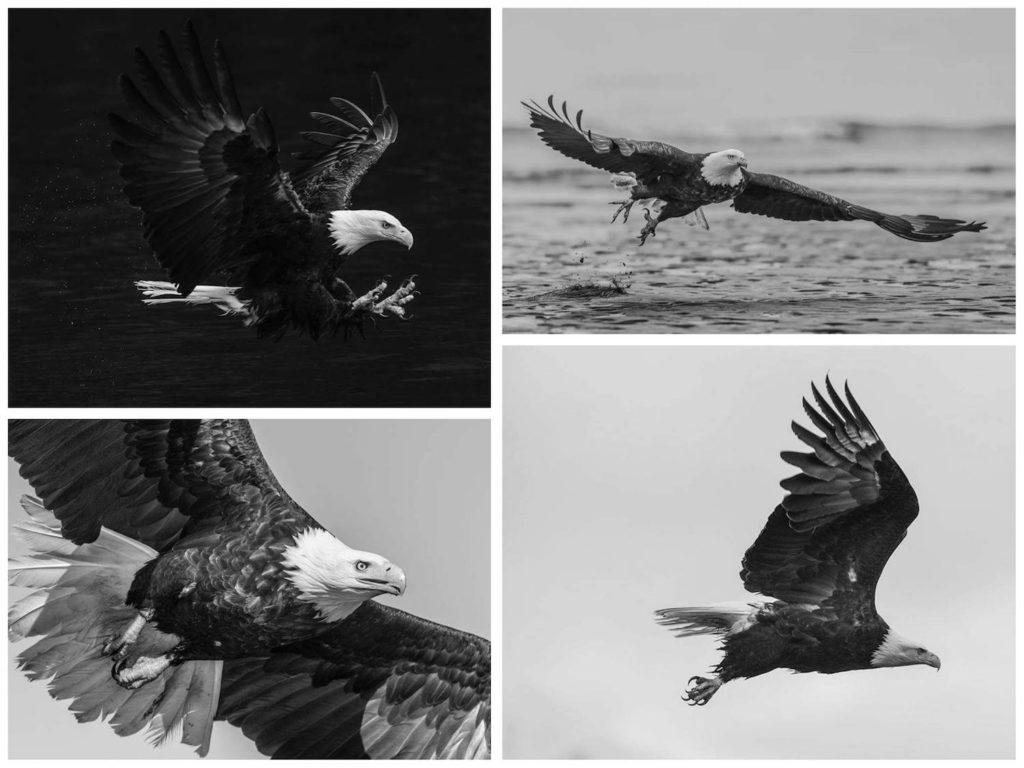 david-yarrow-aguia