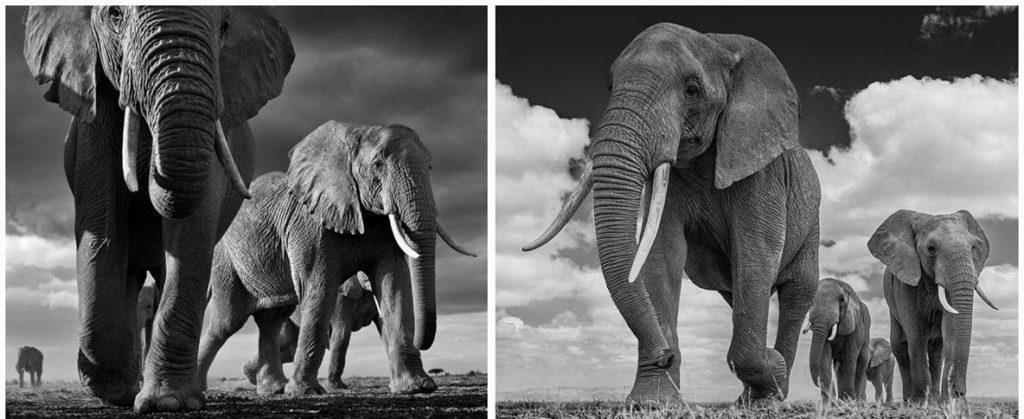 david-yarrow-elefantes