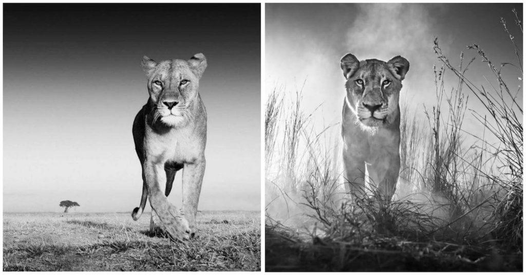david-yarrow-leoa