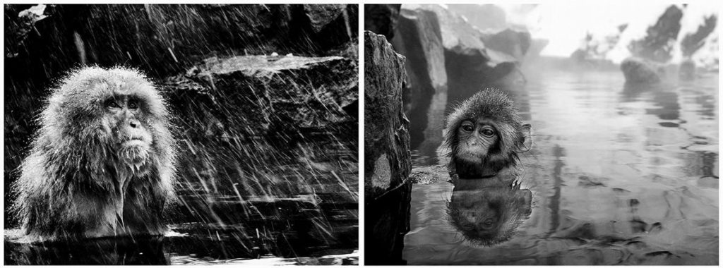 david-yarrow-macacos