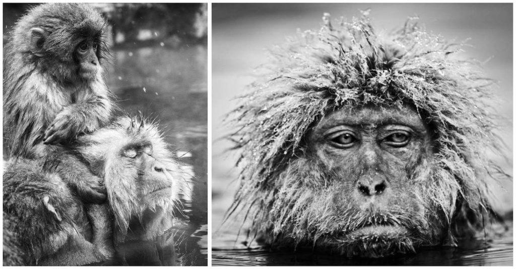 david-yarrow-macacos-2