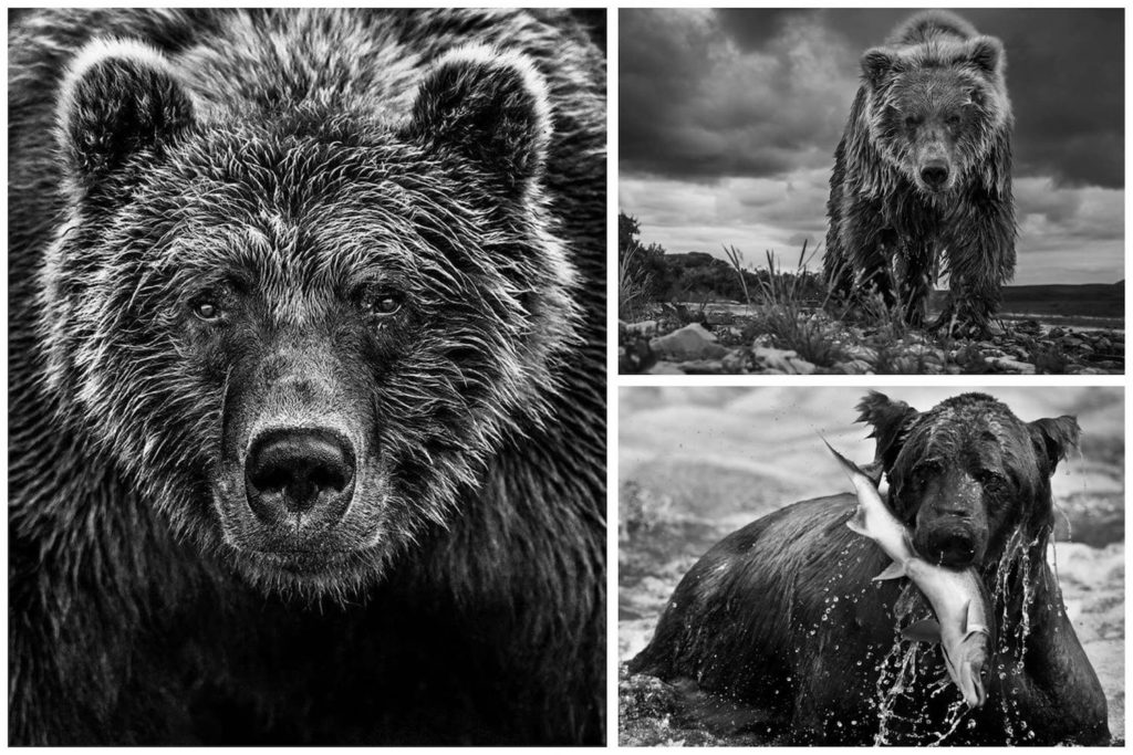 david-yarrow-urso